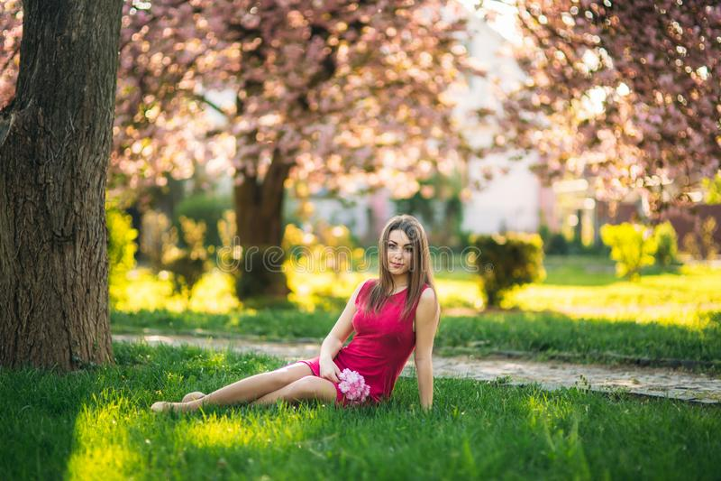 Młodej dziewczyny obsiadanie na trawie i trzyma Sakura kwiaty w jej rękach Tło różowy bokeh Sakura drzewa obrazy royalty free