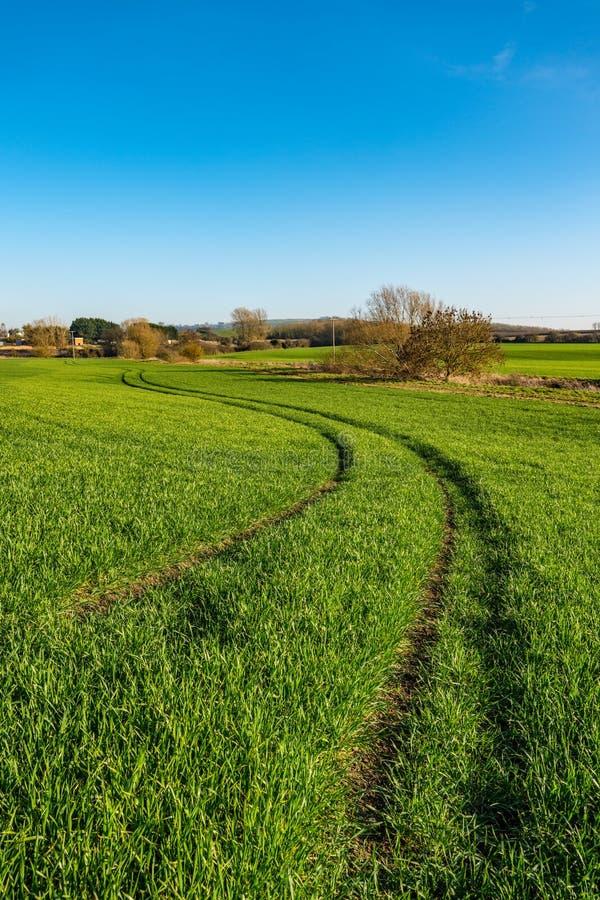 Młody pszeniczny pole, Warwickshire, Anglia obraz royalty free