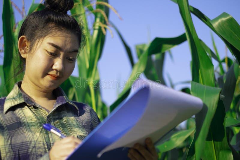 Młody rolnik obserwuje niektóre mapy kukurydzane w segregujący, Eco technologii organicznie nowożytny mądrze rolny pojęcie zdjęcia royalty free