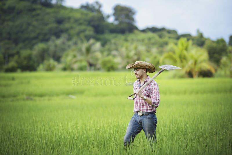 Młodzi rolnicy r ryż w porze deszczowej w ryżu polu obraz stock