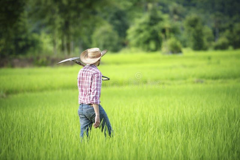 Młodzi rolnicy r ryż w porze deszczowej w ryżu polu zdjęcia stock