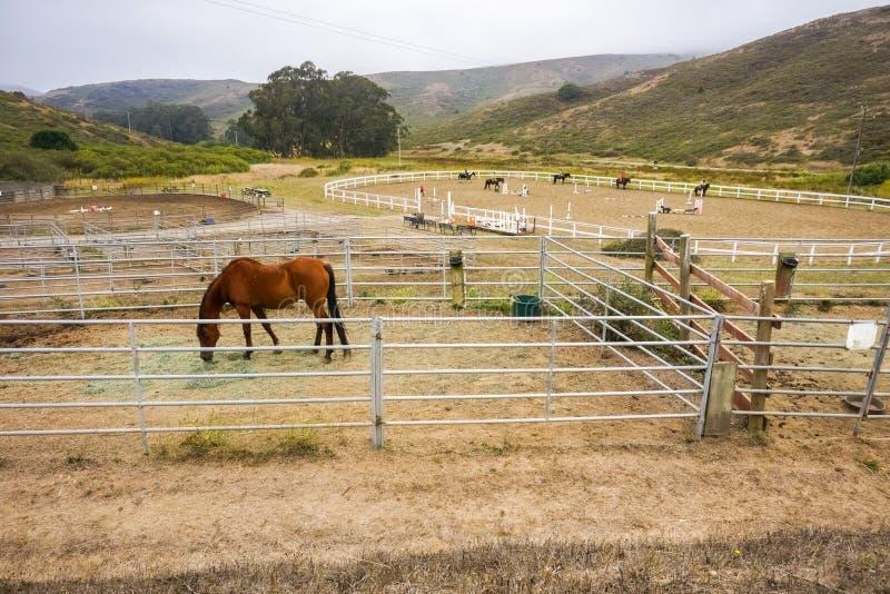 Młyńska dolina CA, usa,/, Sierpień 6, 2016 - Jeździeckie lekcje przy Miwok liberii stajenkami w Marin Headlands fotografia stock