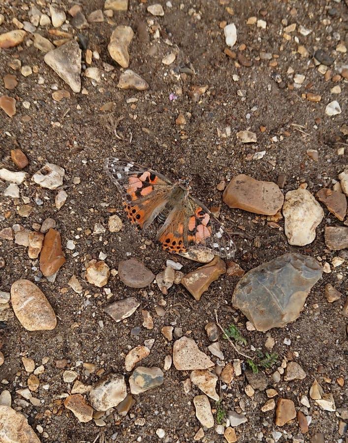 Målad damfjäril på pebbly jordning arkivbild