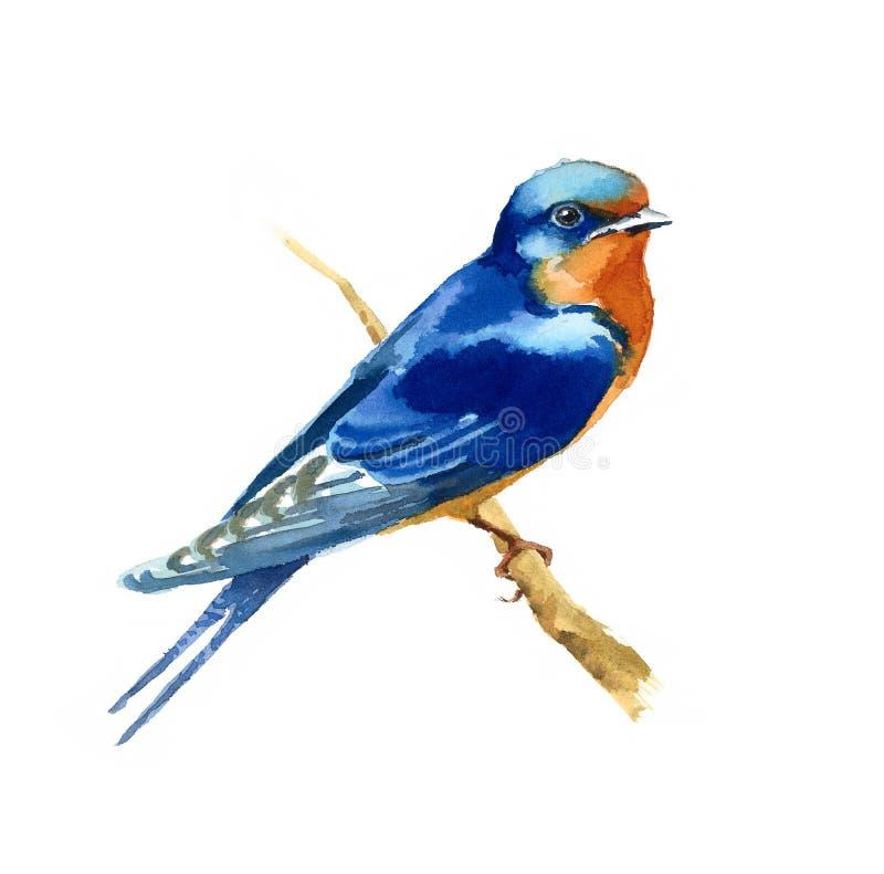 Målad hand för illustration för fågel för vattenfärg för ladugårdsvala stock illustrationer