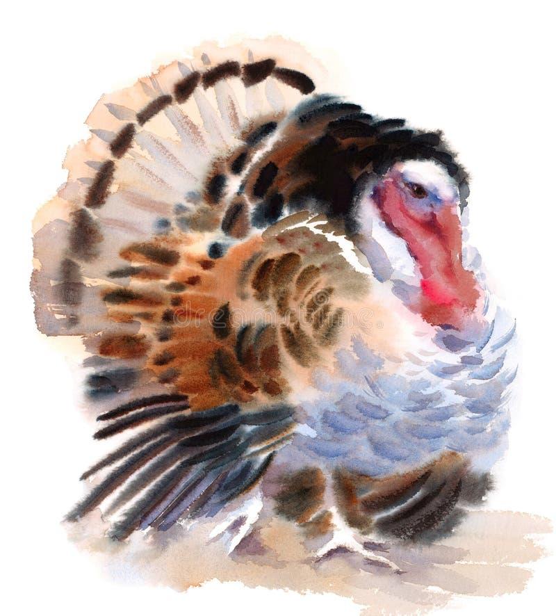 Målad hand för illustration för vattenfärg för Turkiet lantgårdfågel vektor illustrationer