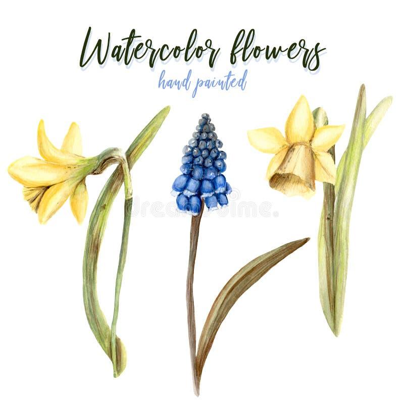 Målad handpaintuppsättning för vattenfärg hand av objekt Blom- blommor vektor illustrationer