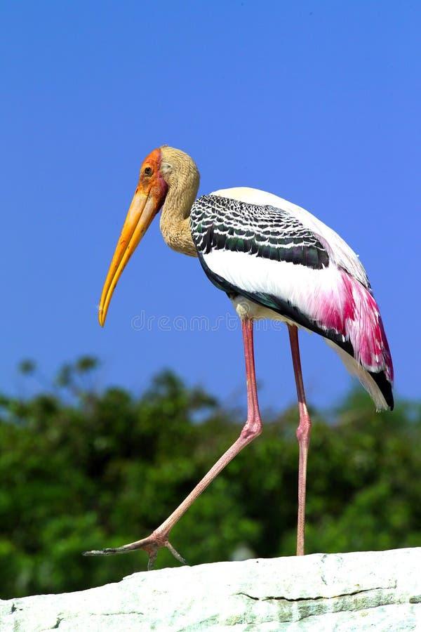 målad stork royaltyfria foton