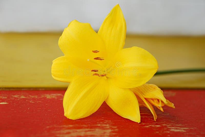 Målad träbakgrund med gula liljablommor arkivbild