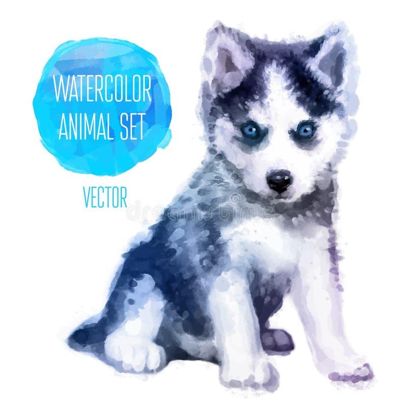 Målad vattenfärg för vektorHuskies hand stock illustrationer