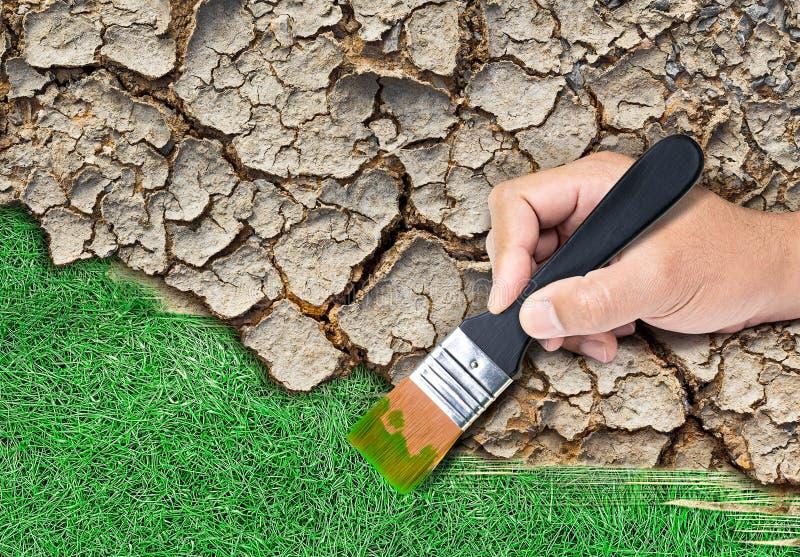 Målarfärggräs på sprucken jord arkivbild