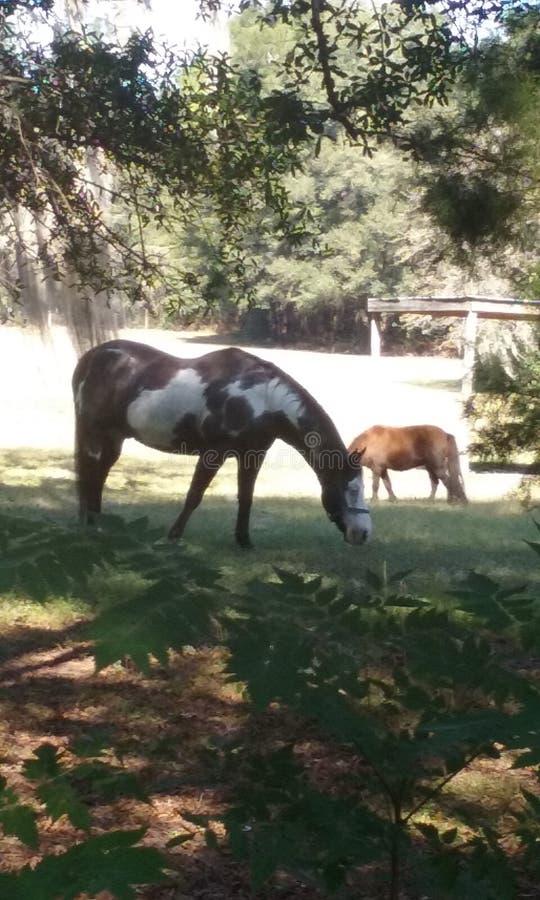 Målarfärghäst och ponny arkivbilder
