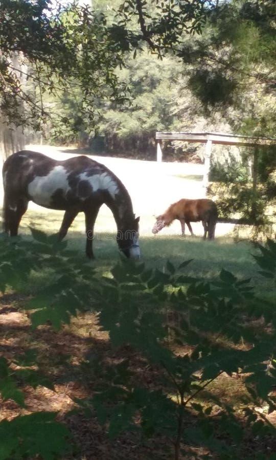 Målarfärghäst och ponny royaltyfria foton
