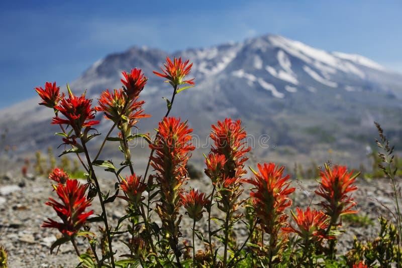 Målarpensel på Mt St Helens royaltyfria bilder
