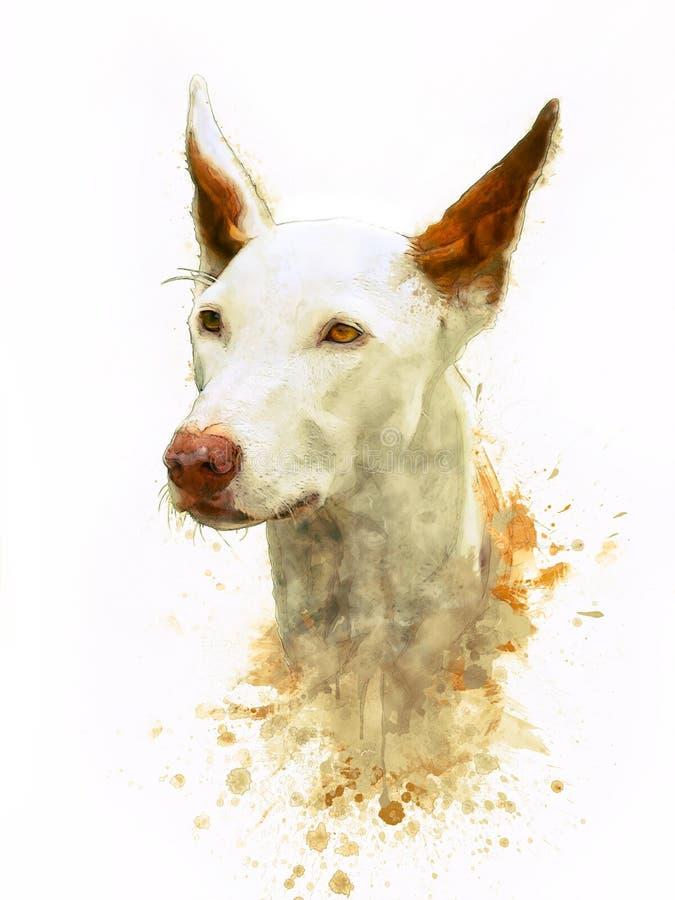 Målning av den Ibizan hunden royaltyfri bild