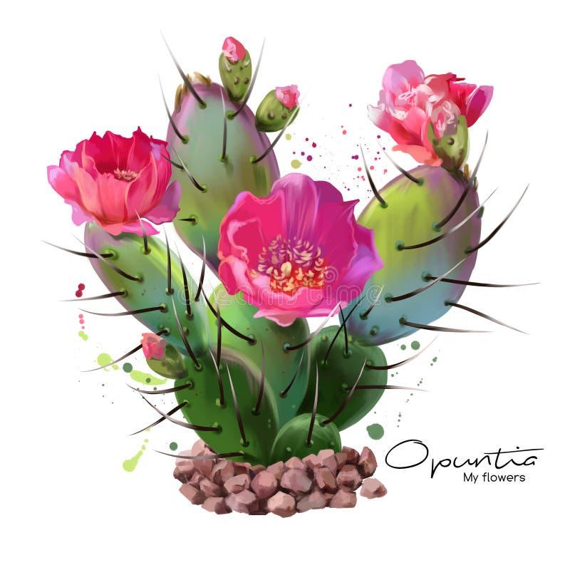 Målningen för kaktusOpuntiavattenfärg stock illustrationer