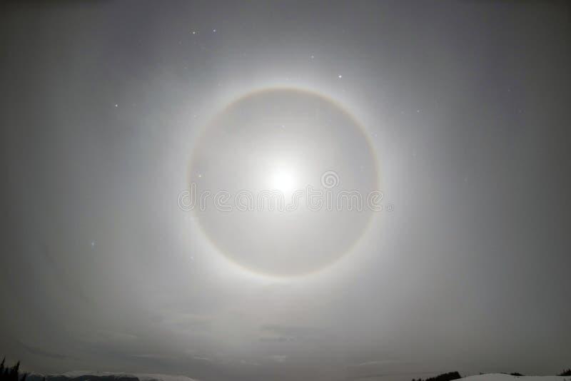 Mån- gloria i fjällängarna arkivbilder