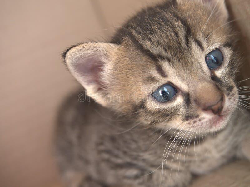 1 månad behandla som ett barn kattungen arkivbilder