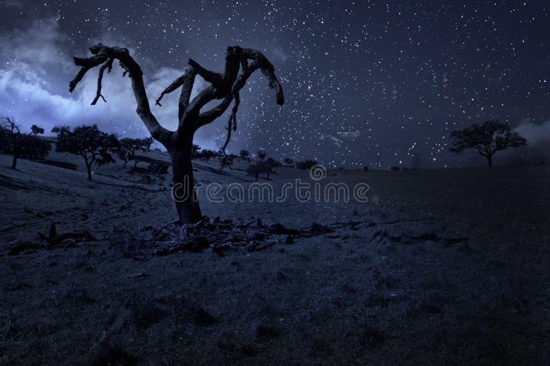 Månbelyst naket träd royaltyfri bild