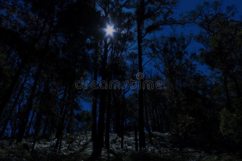 Månbelyst skog royaltyfria bilder