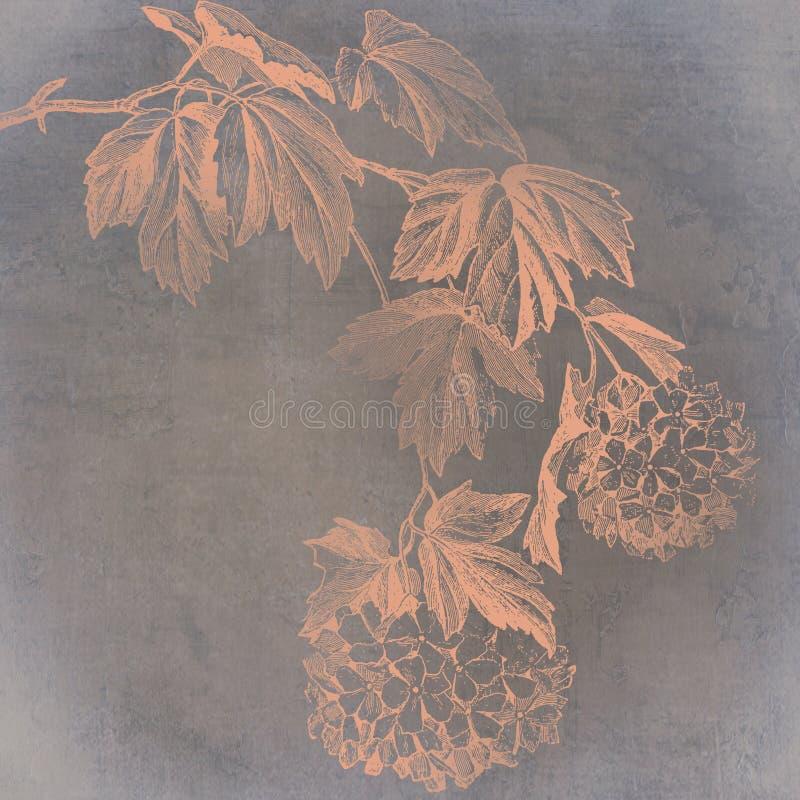månbelyst vanlig hortensia vektor illustrationer