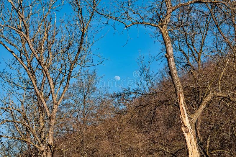 Måne över skogen arkivfoton