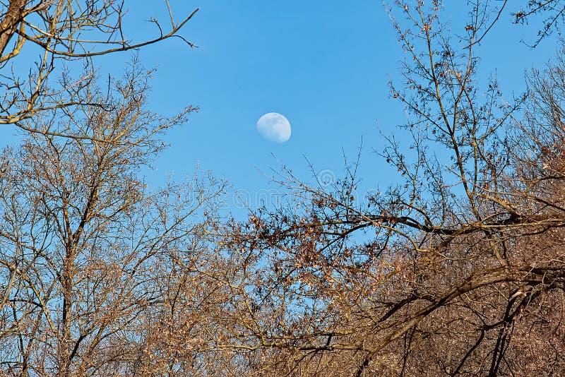 Måne över skogen royaltyfri bild