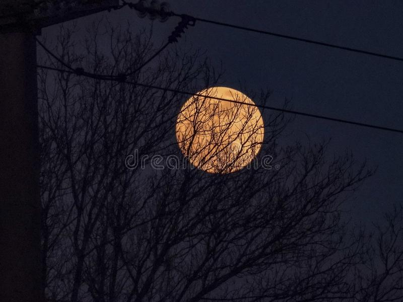 Måne bak träd på solnedgången royaltyfri fotografi