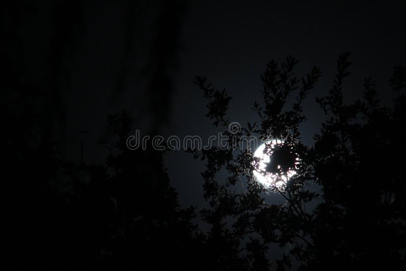 Måne bak träden arkivbilder