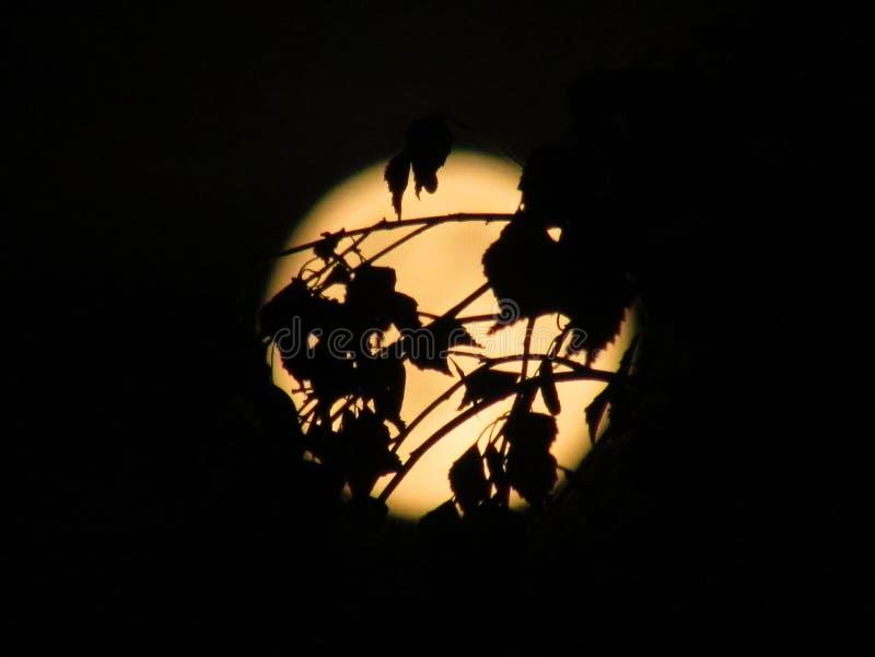 Måne bak trädet arkivfoto