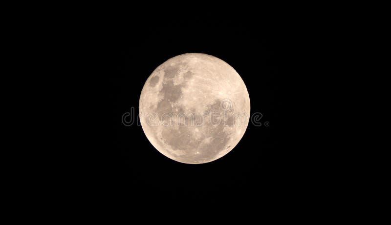 Måne för fullt blod på den mörka natten fotografering för bildbyråer