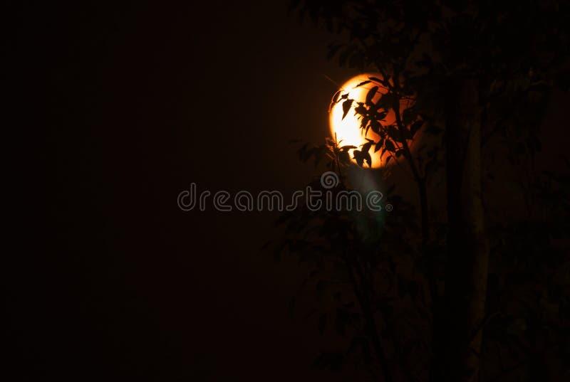 Måne för Tetradpåskhögtidblod bakom i skugga av träd arkivbild