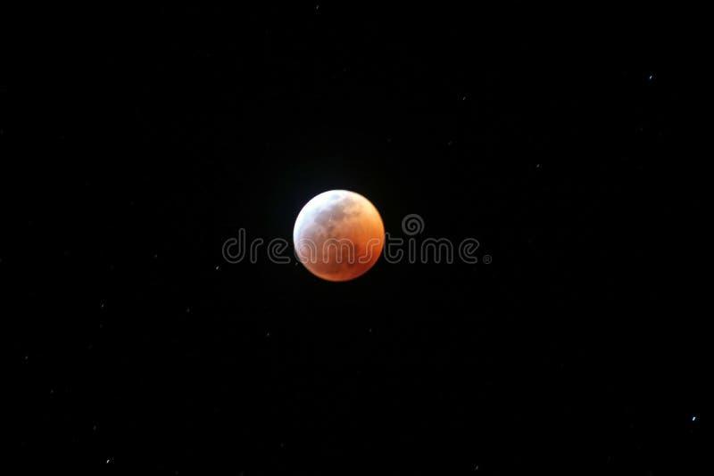 Måne för varg för nästan fullt blod för månförmörkelse 2019 arkivfoto