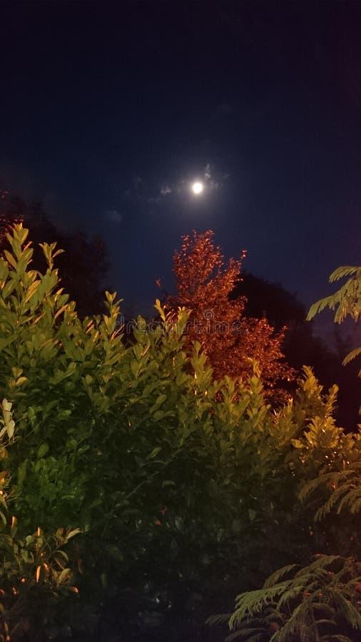 Måne på gryning royaltyfri fotografi