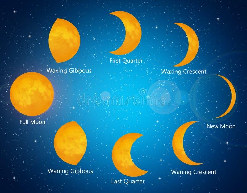 Månefaser vektor illustrationer