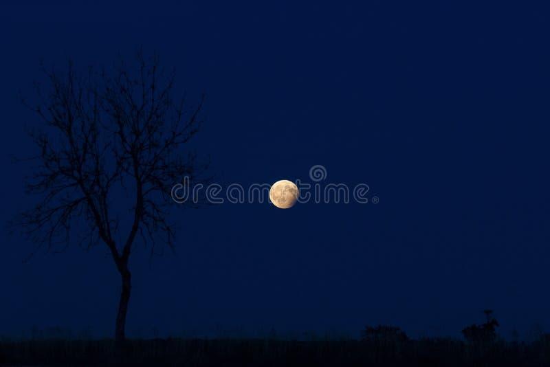 Månen i den blåa natten royaltyfri bild