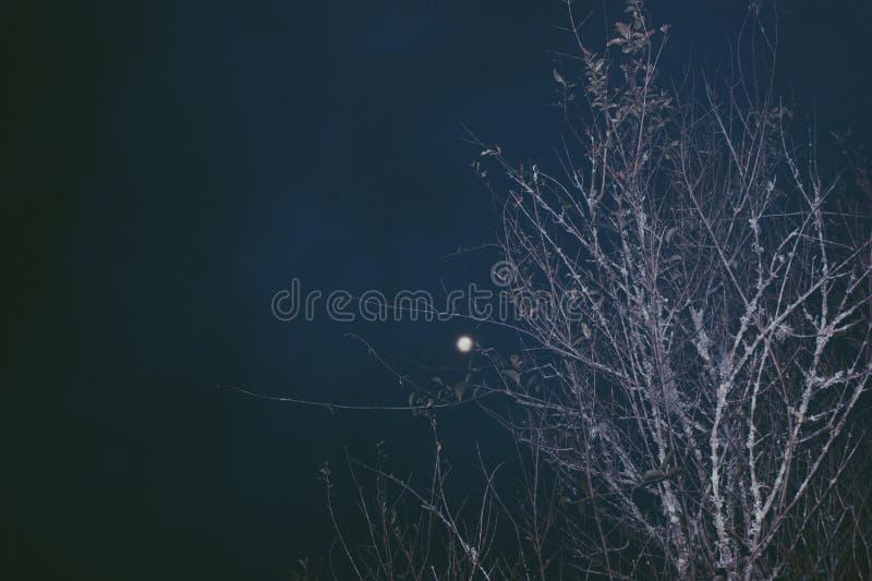 Månen och en avlövad filial royaltyfri fotografi