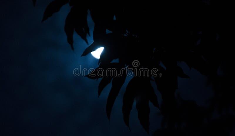 Månenederlag på träd royaltyfri bild