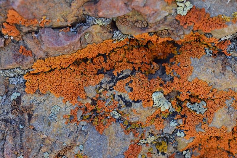 Mång- färg och Crustose lavorganism för typer som uppstår från alger eller cyanobacteria och från svampar på en stenblock i Oquir royaltyfria foton
