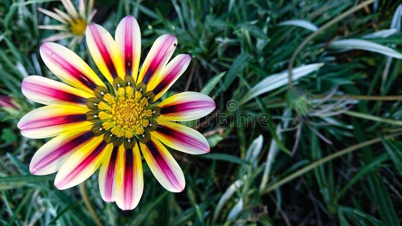 Mång- kulör blomma royaltyfria foton