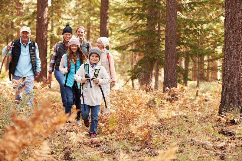 Mång- utvecklingsfamilj som fotvandrar i en skog, Kalifornien, USA arkivfoto