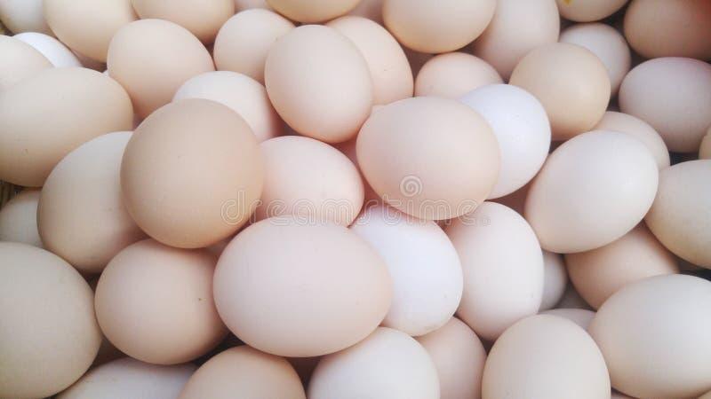 Många ägg i en korg, närbilden av äggen royaltyfri bild