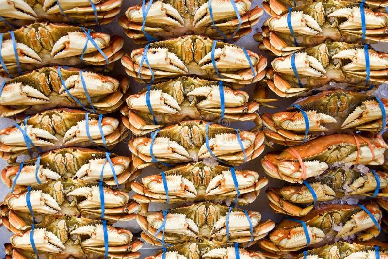 Många apelsinkrabbor på marknaden med blåa gummiband på jordluckrare arkivbilder