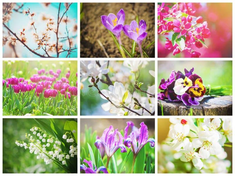 Många bilder av blommor collage royaltyfri bild