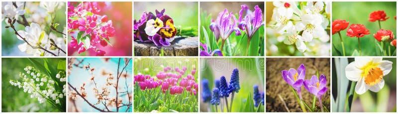 Många bilder av blommor collage royaltyfria foton