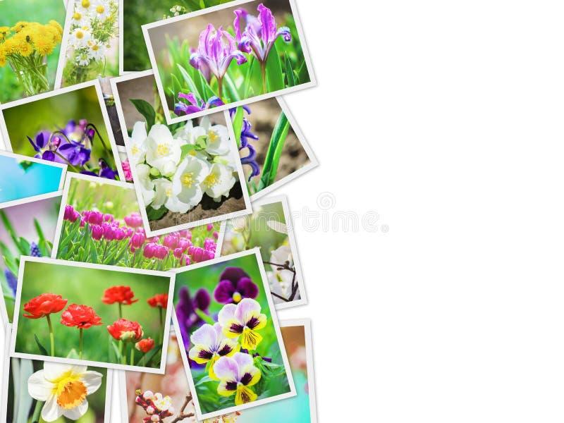 Många bilder av blommor collage royaltyfria bilder