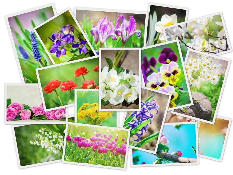 Många bilder av blommor collage royaltyfri foto