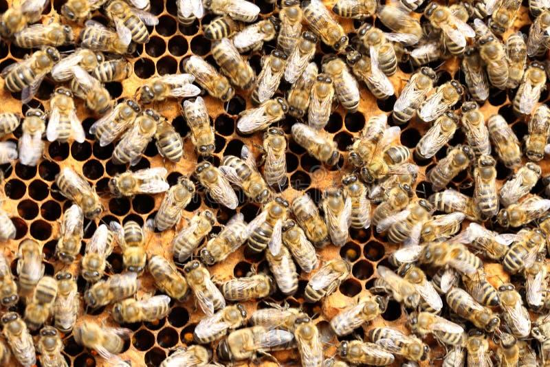 Många bin arbetar arkivbilder