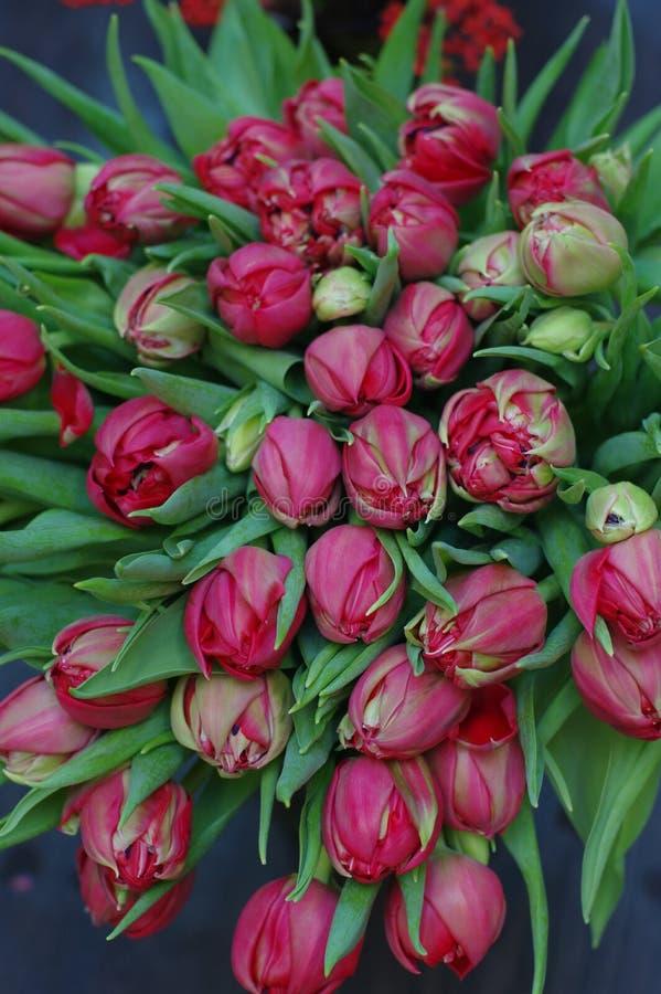 Många blommatulpan för gåva royaltyfria foton