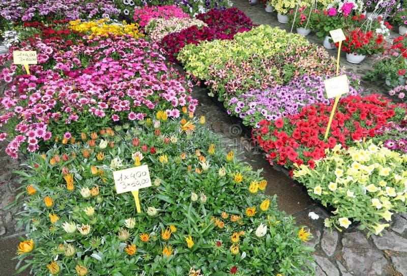 många blommor i krukor på marknaden royaltyfria foton