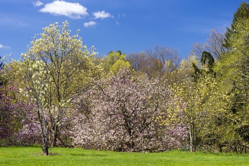 Många blomningträd i guling, rosa färger och lilor som täcker tätt arkivfoto